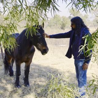 Mohanji healing the horse